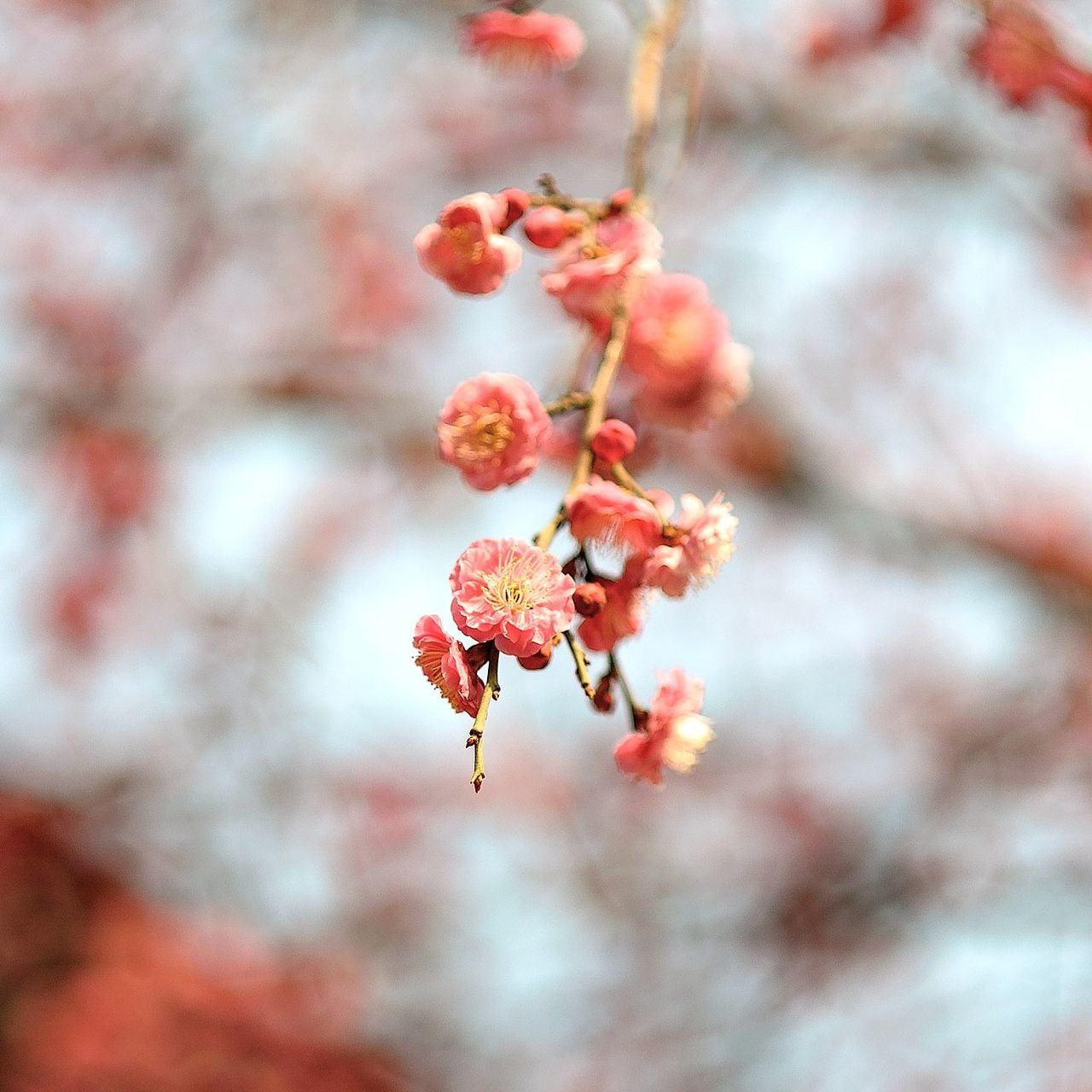 Nature Beauty In Nature Close-up Plant Flower Freshness Cold Temperature Blossom Flower Head Snapshot Feeling Inspired Silence Sunlight Outdoors Nature_collection Nature