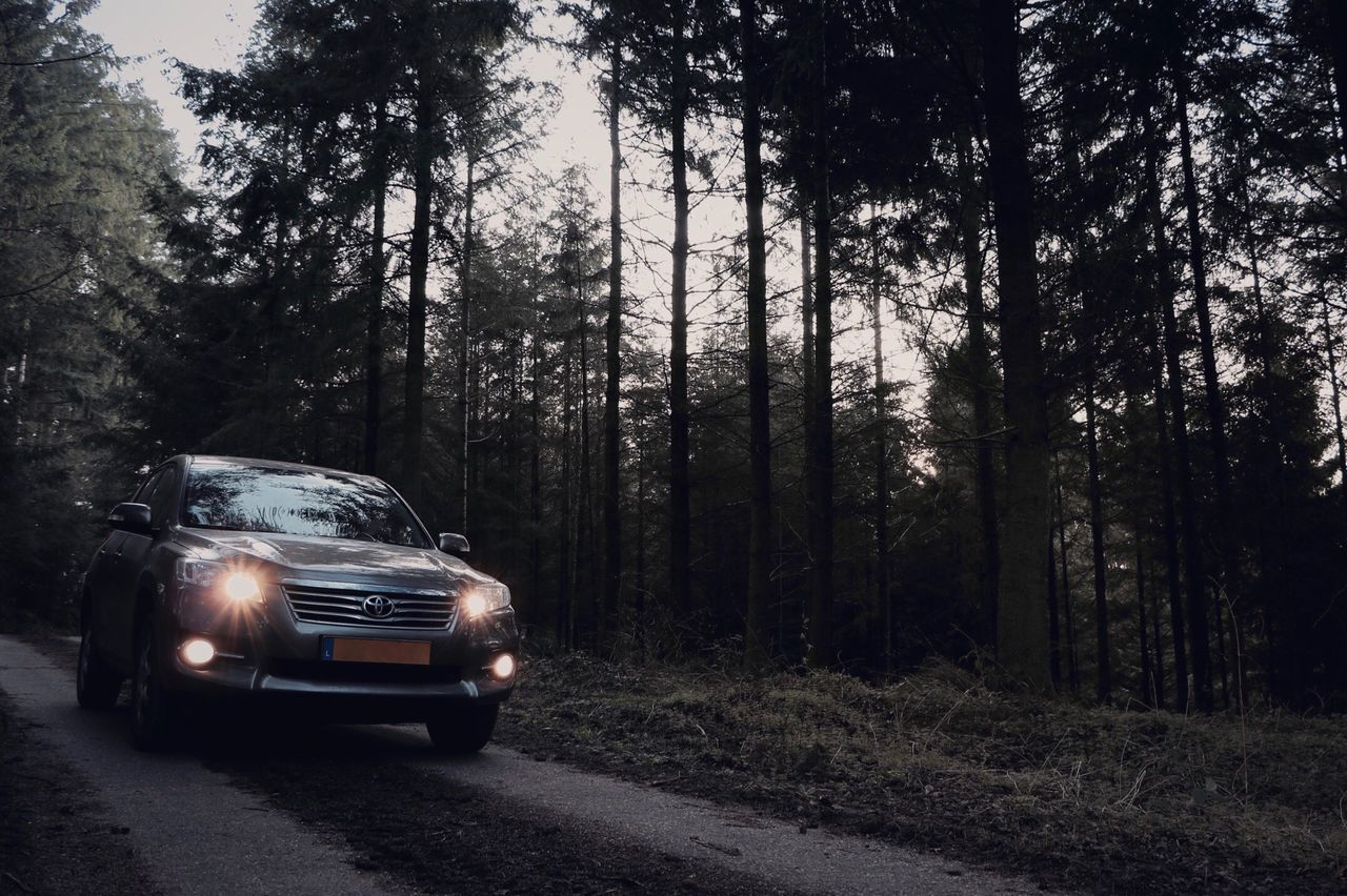 tree, forest, car, transportation, road, day, no people, outdoors