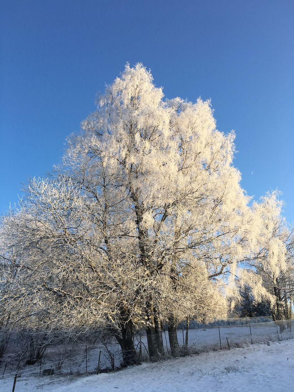 Snow Tree Cold Temperature Winter Nature Blue Beauty In Nature Tranquility Branch Outdoors Scenics No People Day