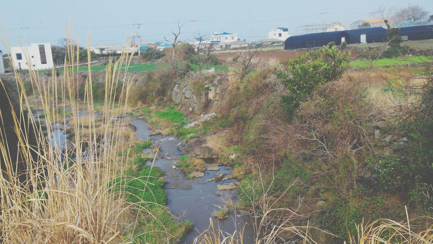 Stream Grain Dirty Trip While Walking Field Trip Long Journey Jeju