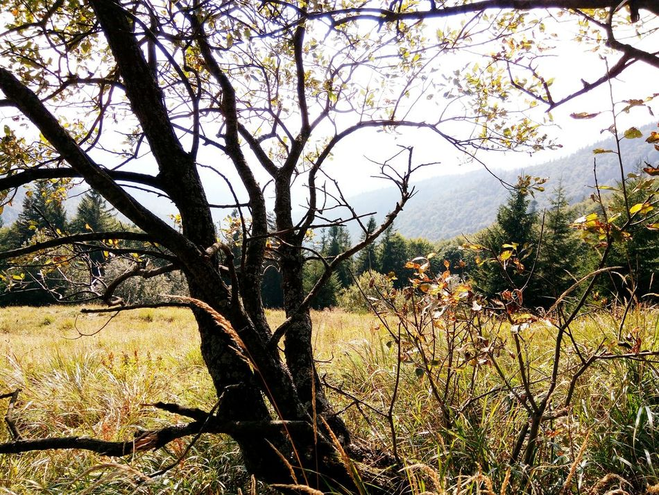 Tree Branch Growth Mountain Tranquil Scene Nature Beauty In Nature Non-urban Scene Outdoors Day Mountain Range Karpaty View Travel Trip Tourism Adventure Relaxation Beauty In Nature Green Sunny Travelphotography Karpathian Scenics No People