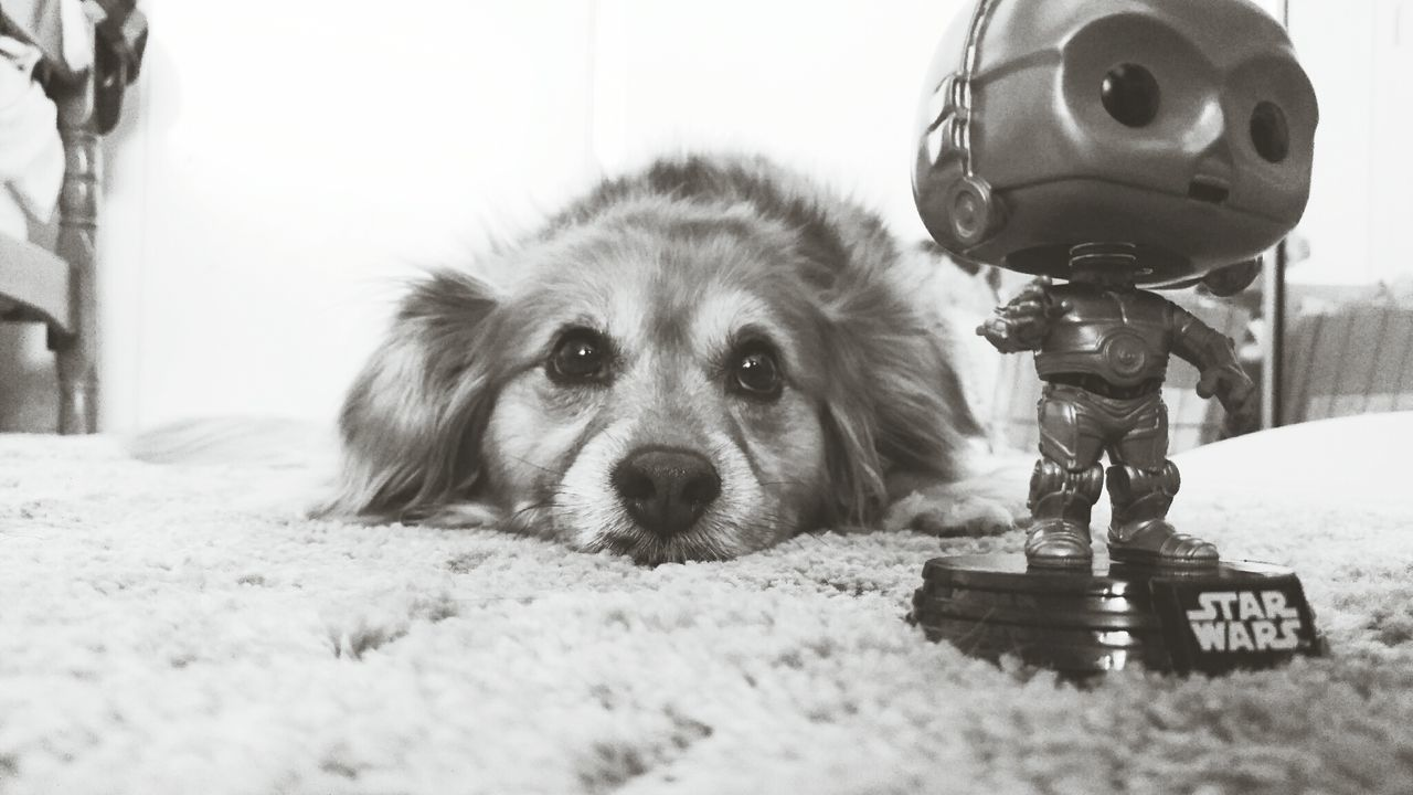 Taking Photos Dog Star Wars C3po Black And White Photography First Eyeem Photo