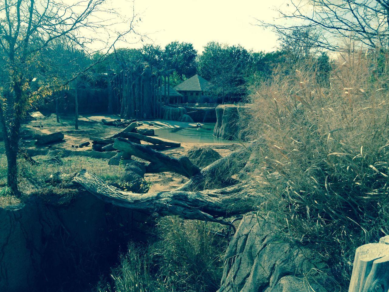 Cascade Desert Elephant Fish Giraffe Pain Pinguin Seahorse Waterfall