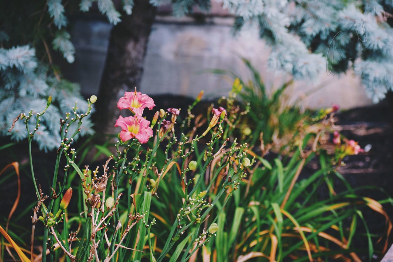 Beautiful stock photos of garden,  Beauty In Nature,  Bloom,  Blooming,  Blossom