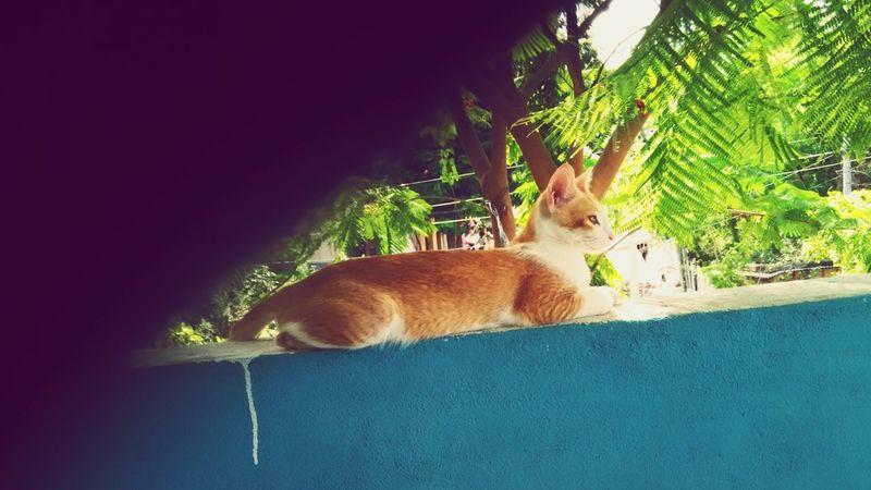 Petlove  Hanging Out Enjoying Life