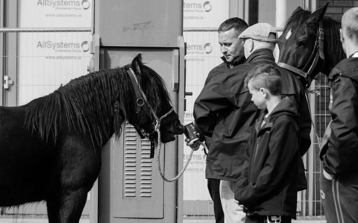 Horses Fair Horsefairs