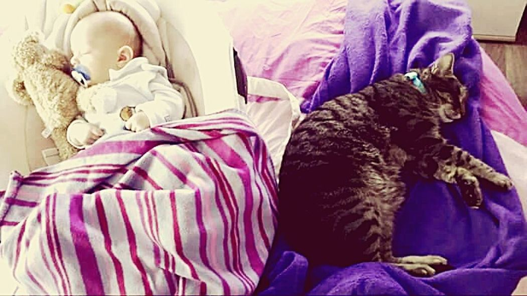 Pets Domestic Cat Bed Indoors  Sleeping Bedroom Purple People Domestic Animals One Person Animal Themes Mammal Leopard Pet Portraits Portrait The Week On EyeEm One Animal Modern Love Babies Baby ❤ Indoors  Lying Down My Loves❤ Be. Ready.