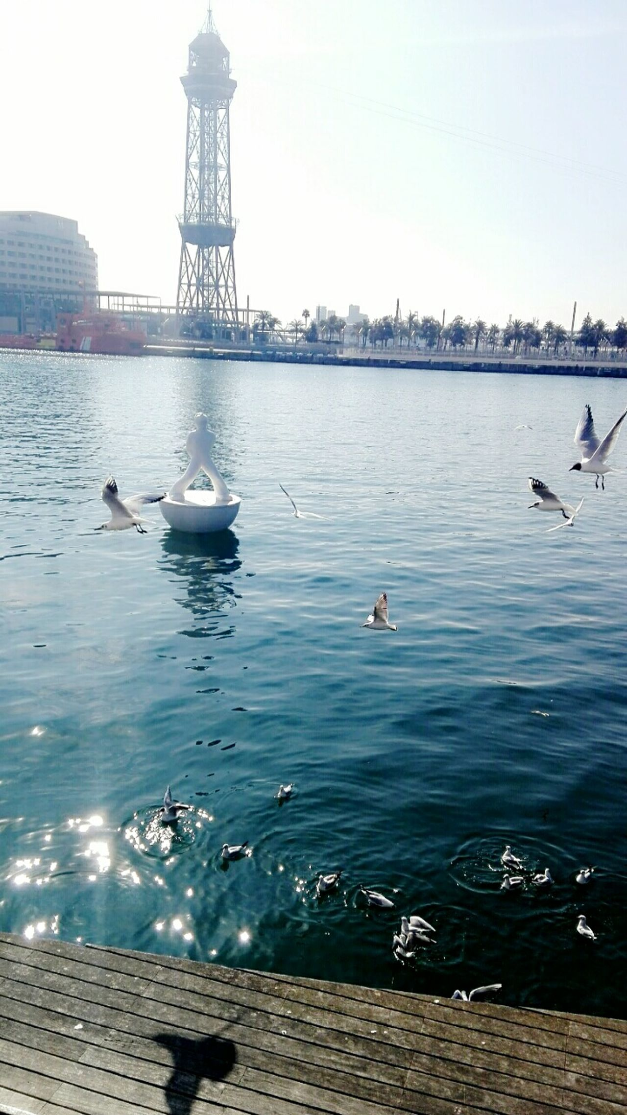 City Water Travel Destinations Bird Sky Sea Outdoors Animal Themes Nature Day Barcelona l BARCELONA PORT Seagulls Midflight Cable Car Art Shadows Dock Puerto Ripples Rippled Water Sunlight Sunbeam