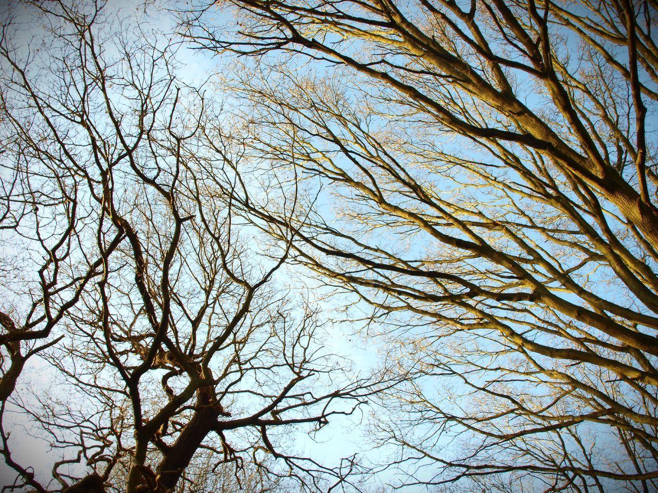 Stevesevilempire London TreePorn Nature Olympus Outdoors Trees Zuiko Forest Steve Merrick Hampstead Heath