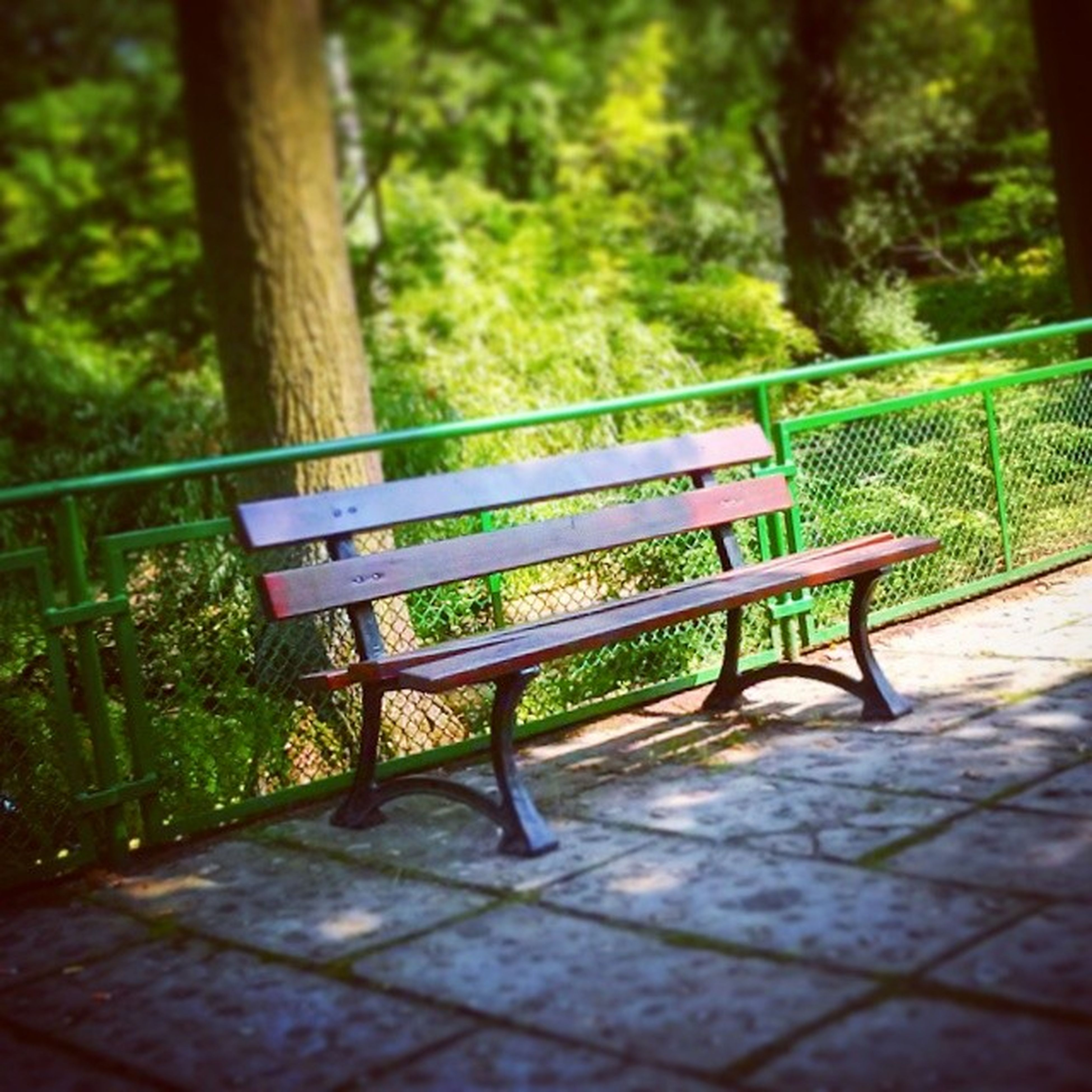 bench, tree, empty, park bench, absence, park - man made space, railing, tranquility, wood - material, shadow, seat, park, sunlight, growth, nature, footpath, chair, day, outdoors, green color