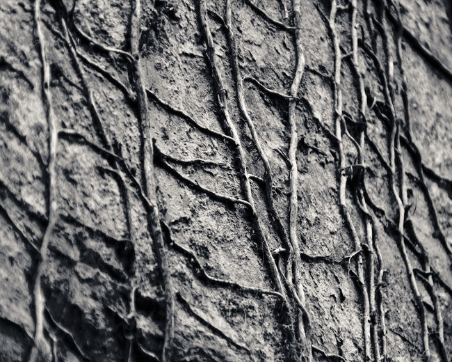 Close-up Creepers Creeping Detail Dry Focus On Foreground Natural Pattern No People Rough Texture Textured  Trailing Twig Vines Fine Art Photography