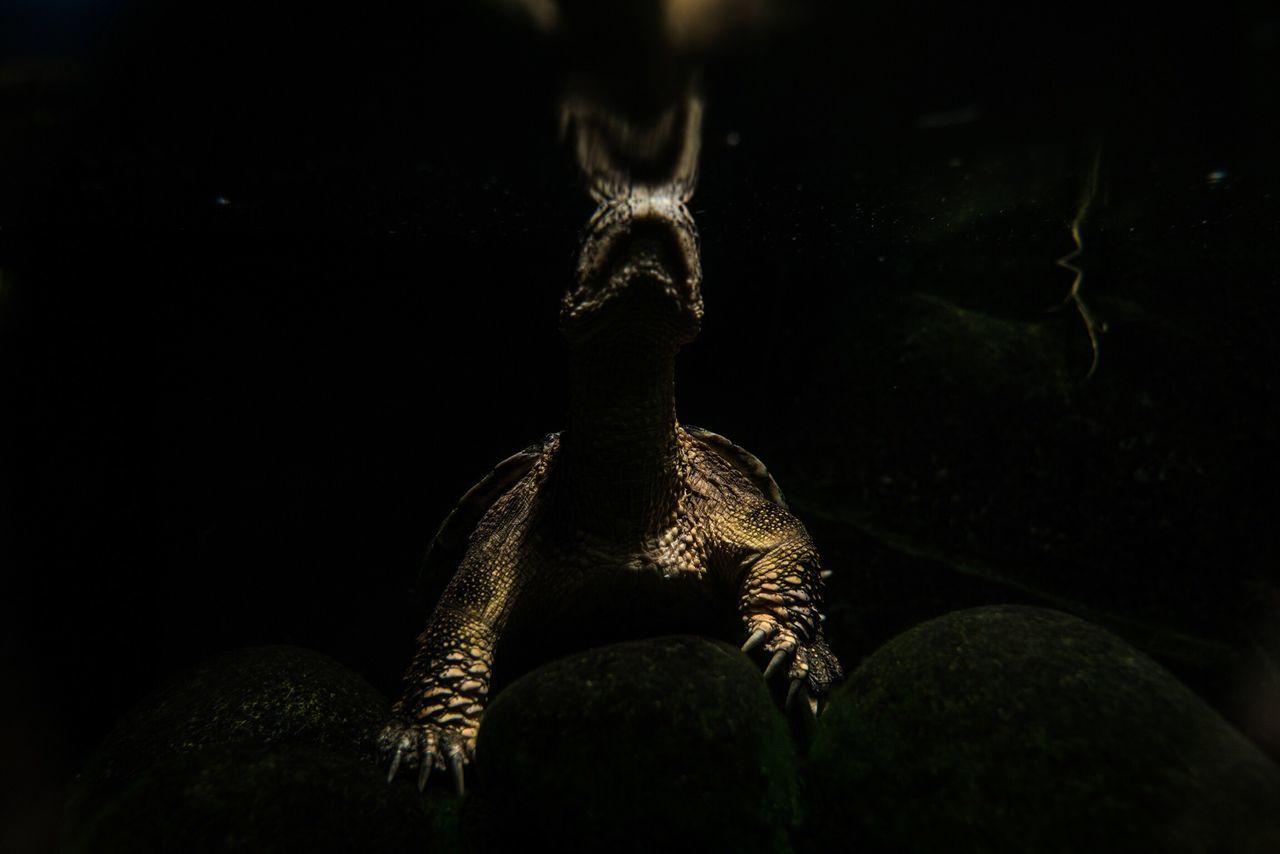 Pairi Daiza Zoo Belgium Belgique Turtle Underwater Artistic Dark Almost