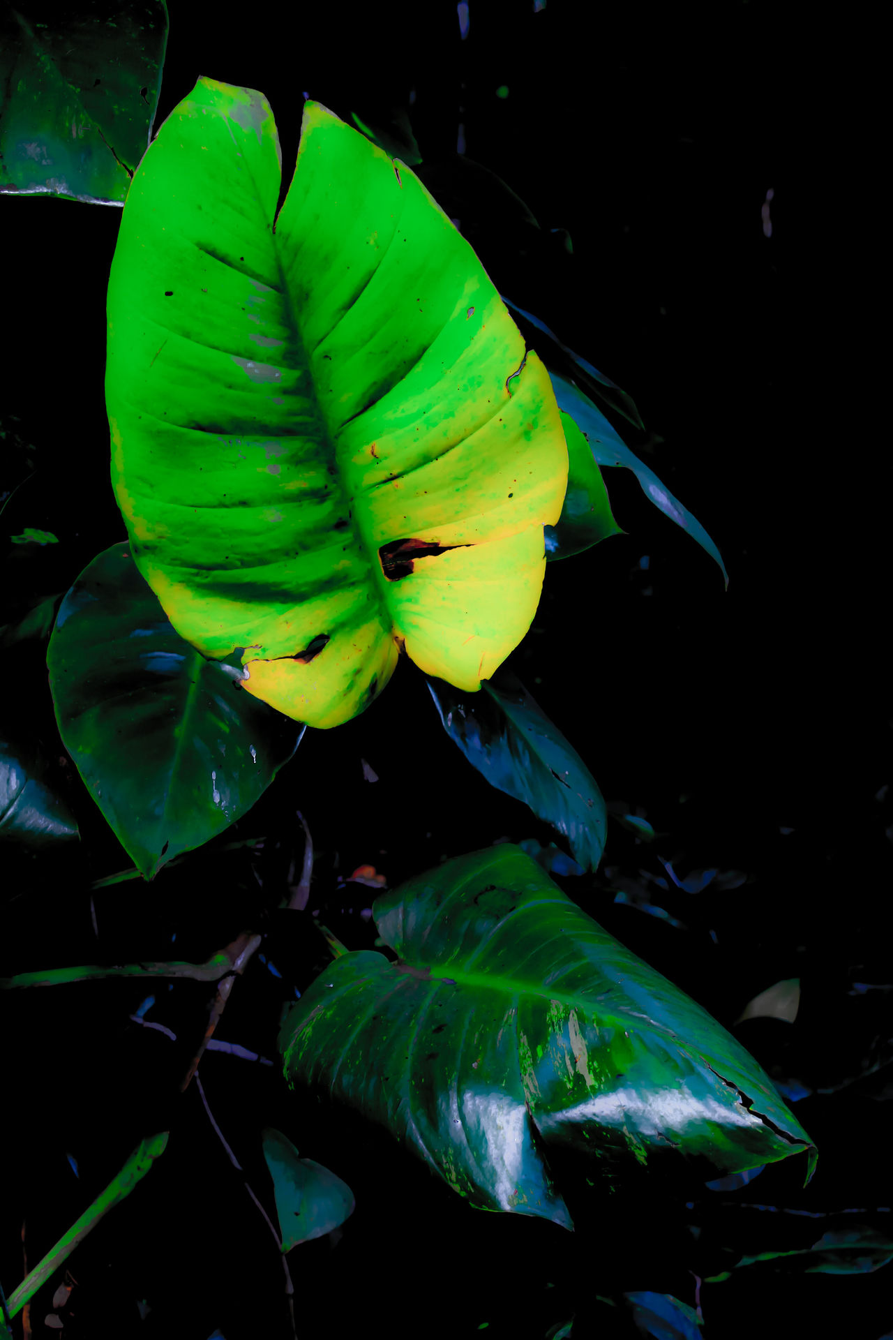 Botany Greenery Side Of The Road Hawaii Life Nature Kauai Freshness Bright Leaf Dark Jungle Leaf