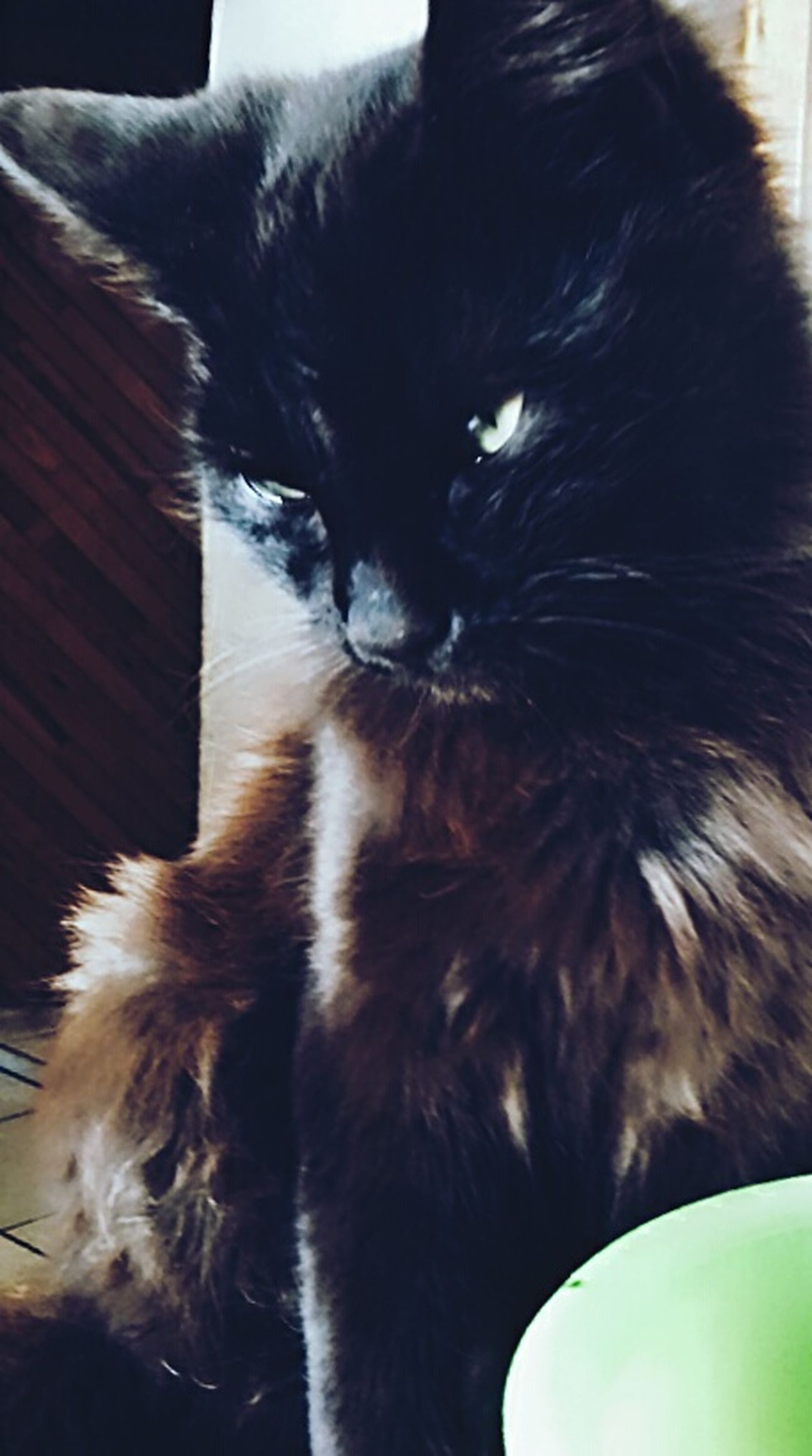 Feline Close-up Cats 🐱 Black Cats Are Beautiful Black Cats Pets Black Cats Lovers Animal Themes Domestic Cat Domestic Animals Kittens Kitty Cat Kitten 🐱 Green Eyes Cat Eyes Black Cat Head Shot