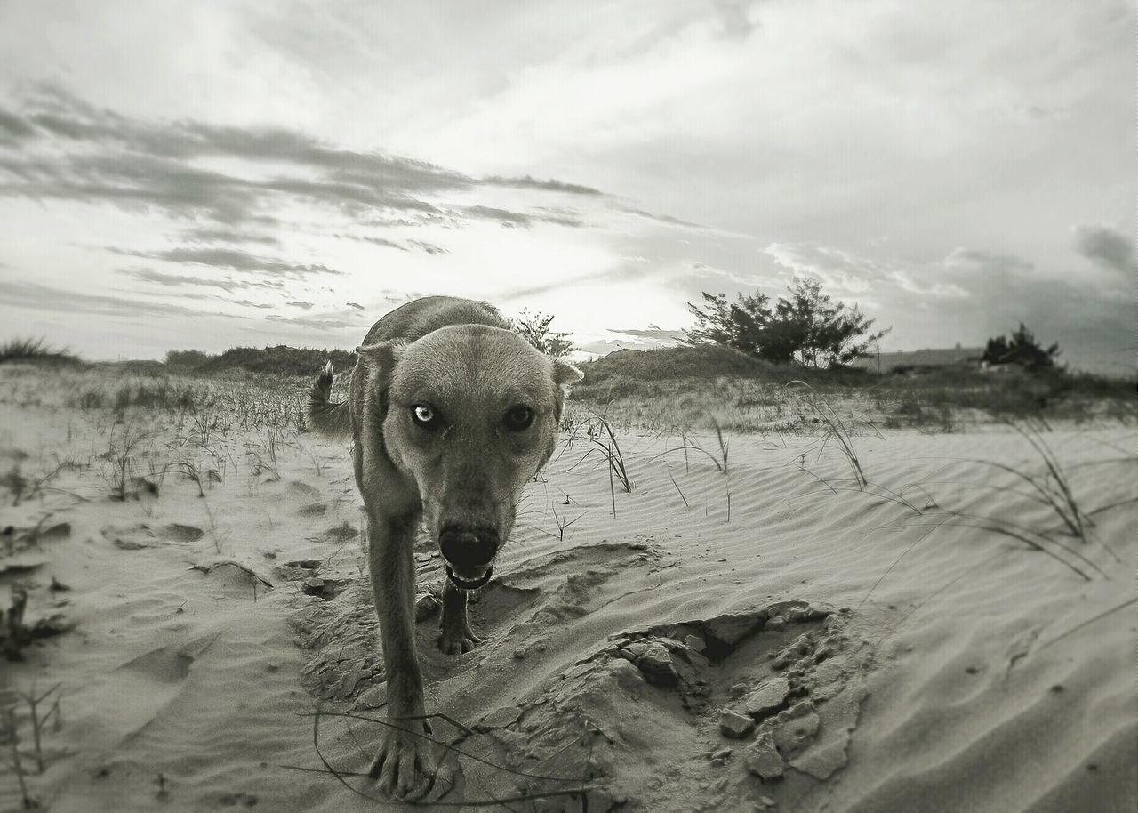 Beautiful stock photos of hunde, Animal Themes, Beach, Close-Up, Cloud
