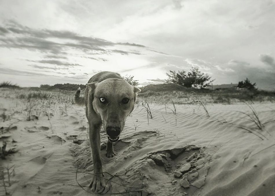 Beautiful stock photos of hunde, Animal Themes, Beach, Close-Up, Cloud