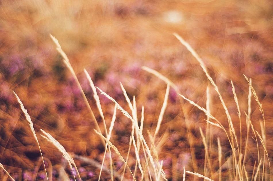 Open Edit OpenEdit Autumn Colors Autumn Autumn🍁🍁🍁 Autumn Collection EyeEm Best Shots EyeEm Nature Lover Depth Of Field Bokeh Bokehlicious Bokeh Photography Pontevedra Galicia SPAIN EyeEmBestPics Naturelovers Nature_collection Beautiful Nature Natural Beauty