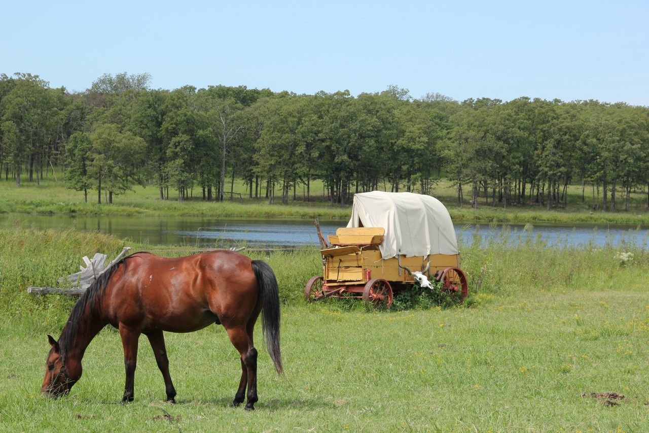 Side View Of Horse Grazing On Grassy Field