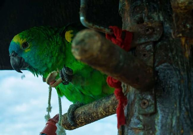 Parrot Animal Photography Animal Head  Bird Animal Wildlife Parrot Animals In The Wild Multi Colored