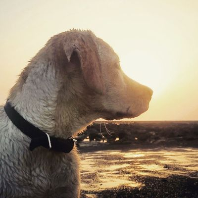 """""""Dogs are not our whole life, but they make our lives whole."""" -Roger Caras"""