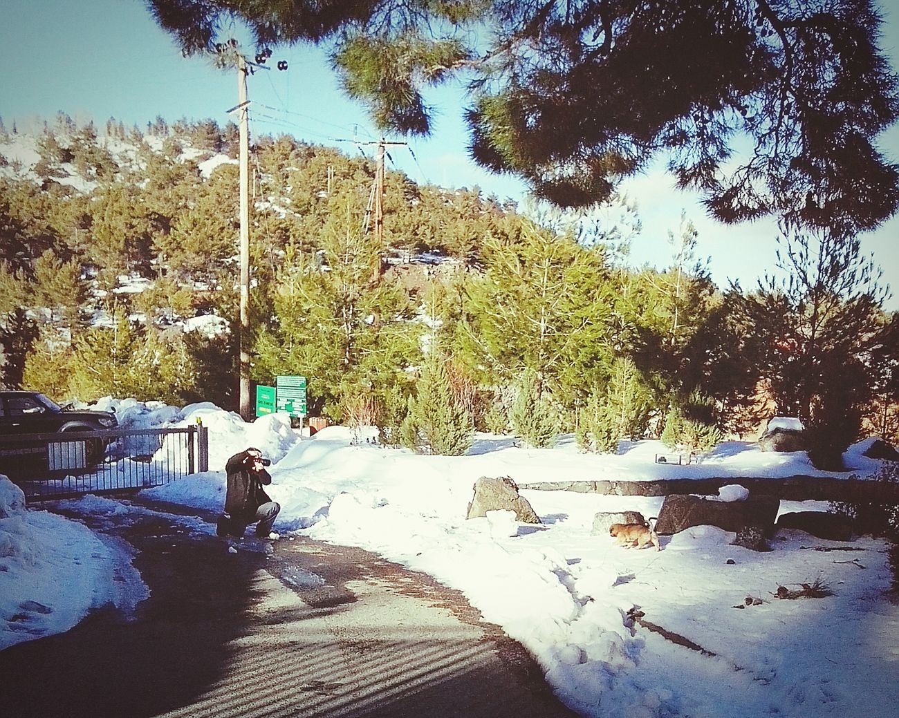 My Mans Love ♥ Husband Puppy in Troodos