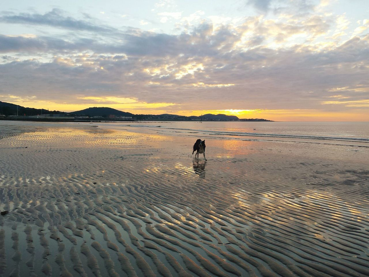 Border Collie At Beach Against Sky During Sunset