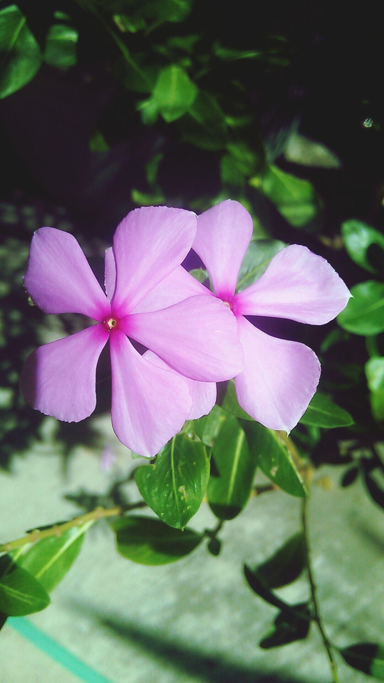 ดอกไม้ เธอชั่งสวยงดงามเหลือเกิน ถ้าอยู่......ตรงนั้น