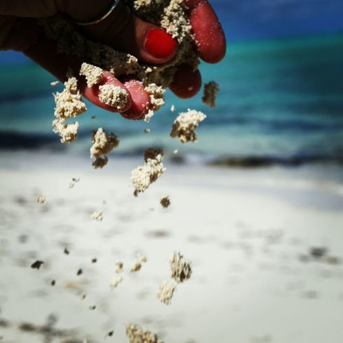 Sea Beach Sand Sea Life Close-up Day EyeEmNewHere Outdoors Bythesea Turks And Caicos Islands Turks And Caicos Photography The Week On EyeEm