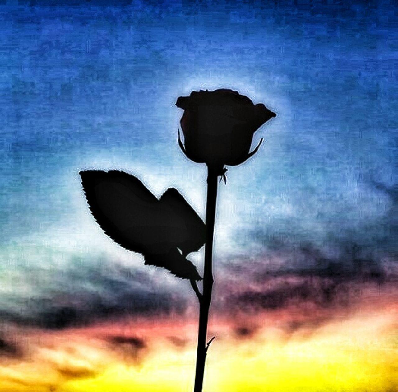Güller her zaman karanlığın arkasına saklandılar. Flowers Fotography Manzara Symbol Darkness Gul Karanlık First Eyeem Photo Istanbul Turkey çiçekler 🌸 çiçek Turkey Historical Building History Turkeyphotooftheday Yaraticilik