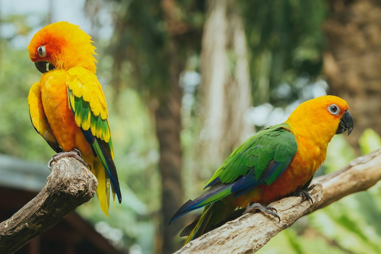 Beautiful stock photos of parrot, Animal Themes, Bird, Close-Up, Day