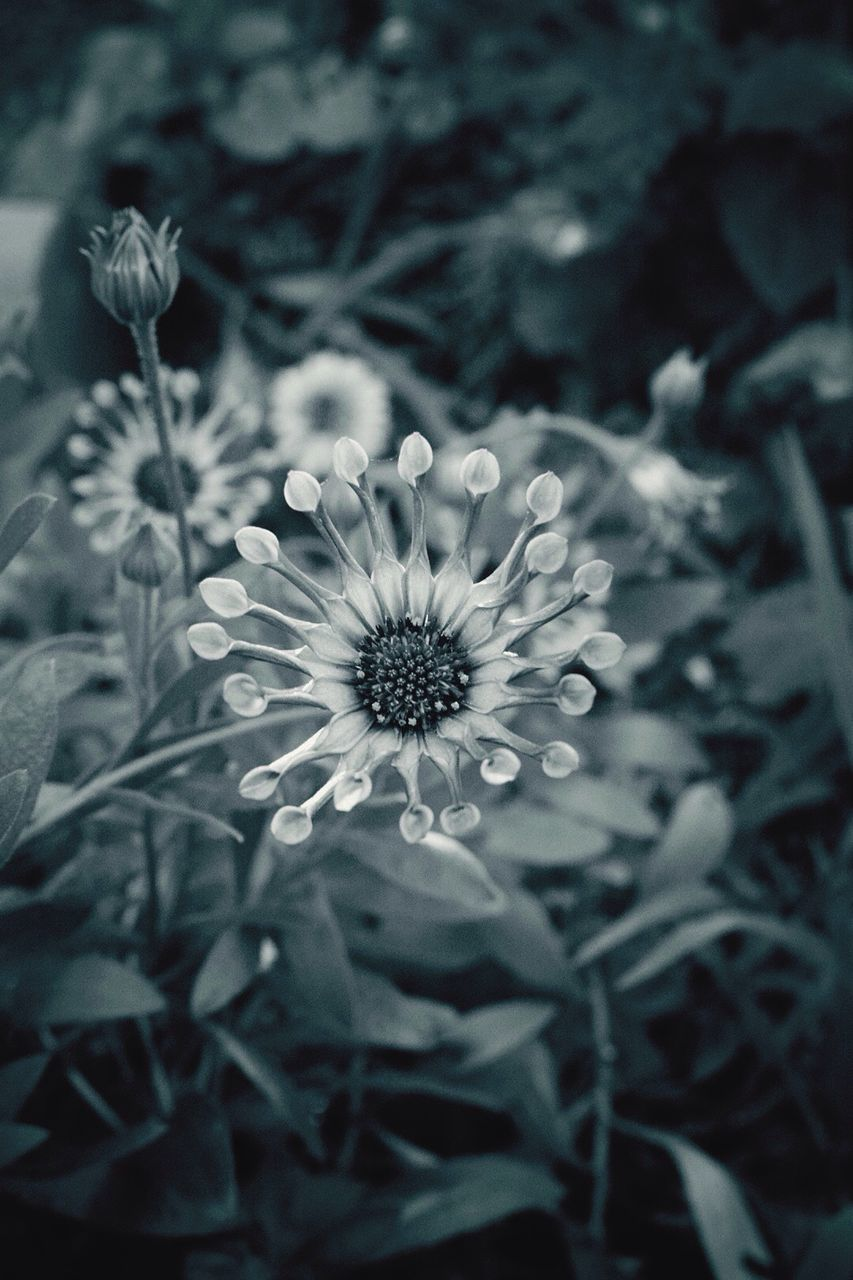 flower, growth, plant, nature, petal, blooming, beauty in nature, flower head, fragility, flora, freshness, spring, no people, outdoors, close-up, day