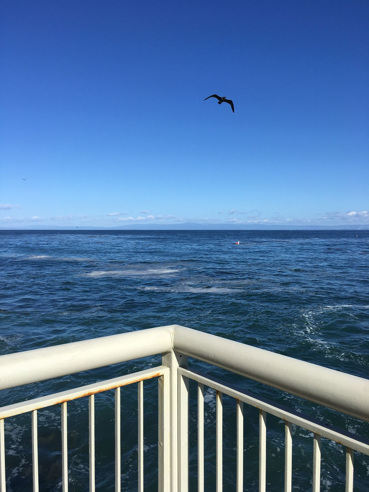 sea soar serene Monterey Bay Aquarium Ocean Blueskies Freedom Seagull
