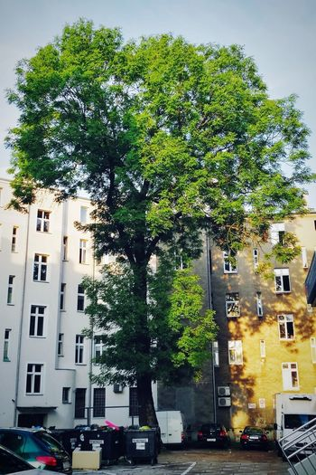Tree Building Exterior Architecture Built Structure City Car Street Transportation Outdoors Residential Building Land Vehicle Day No People Sky Architecture Nature Tree Background Beauty In Nature Green Color Backgrounds