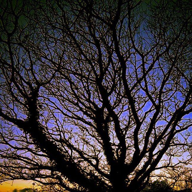 """Tree at dusk"" Trees Sunset Dusk Winterwalk Winterscene Sky Skyscene Branches Braunton Devon"