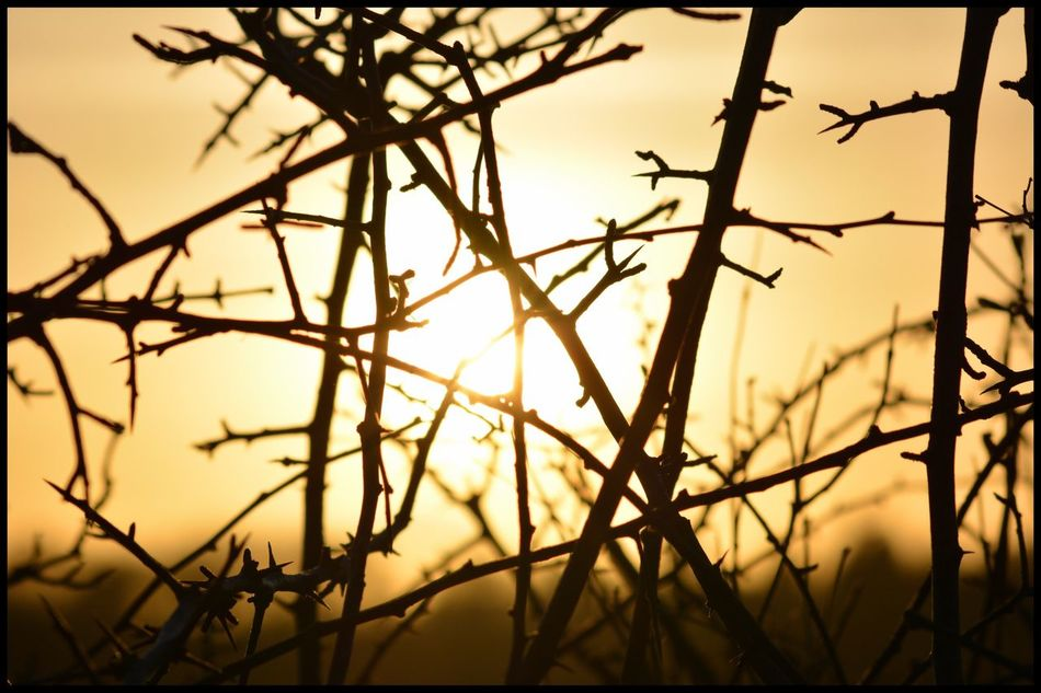 Sunset Through Trees Nature Sunlight Focus On Foreground No People Orange Color Silhouette Growth Close-up Outdoors Beauty In Nature Sun Tranquility Branch Sky Plant Tree Day Sunset #sun #clouds #skylovers #sky #nature #beautifulinnature #naturalbeauty #photography #landscape Sunsets Sunset_collection Nature Nature_collection EyeEm Gallery