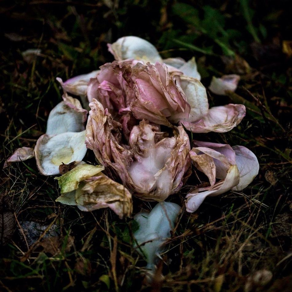 Flower #flowers #flowerporn #flowermagic #flowermagic #flowerpower #flowerlovers #instaflower #花 #花愛撫 #切ない #今夜も眠れない #今夜も