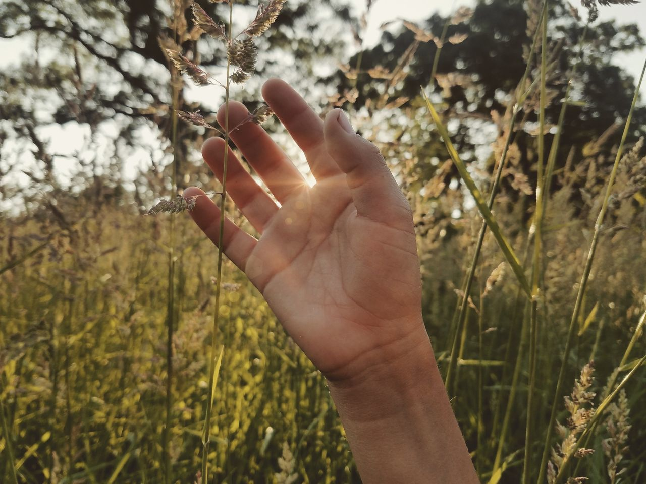 It's here, summer. Human Body Part Human Hand One Person Nature People Outdoors EyeEm EyeEm Best Shots Full Frame Getting Inspired Android Photography Samsung Galaxy S7 Edge Light Sommergefühle