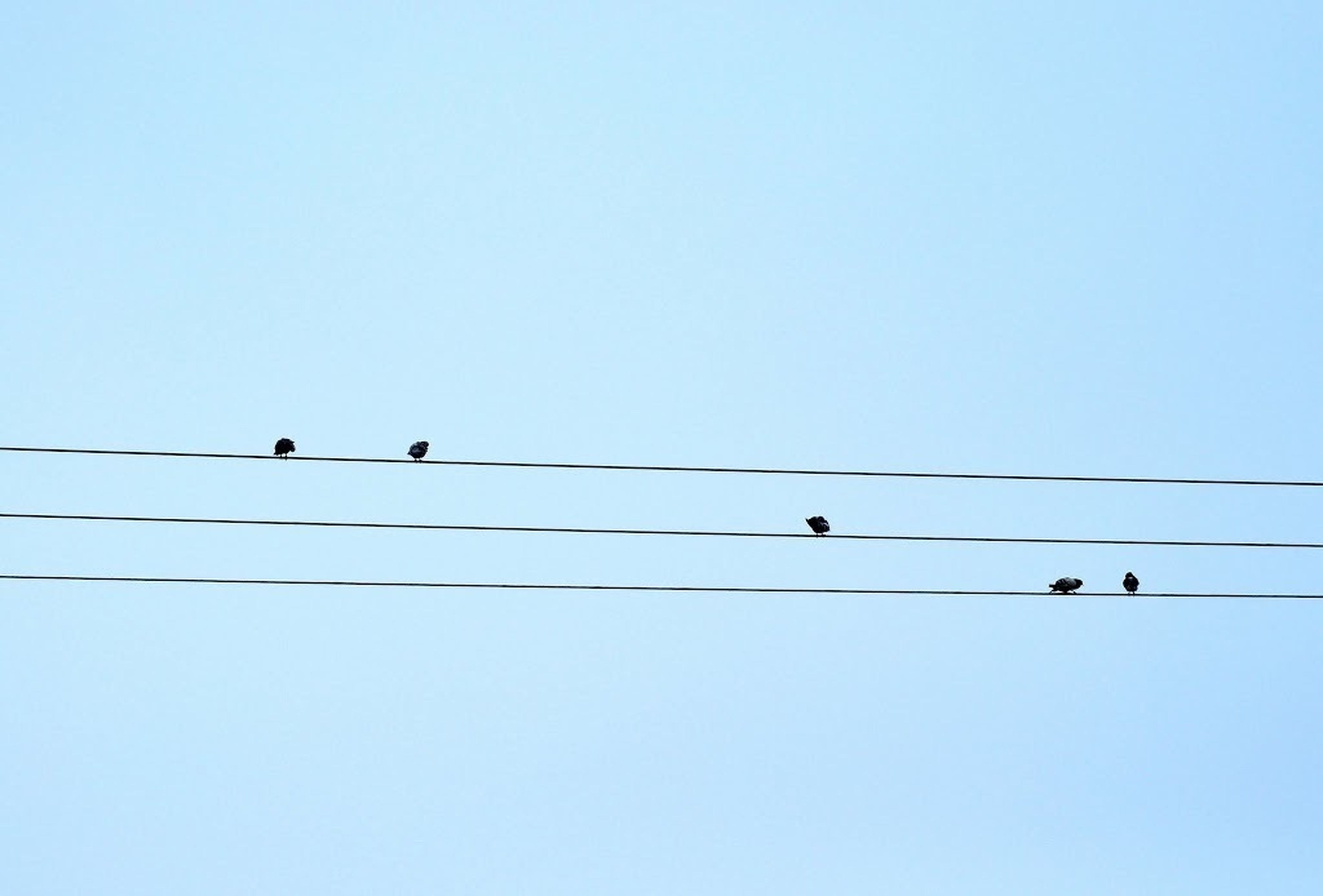 animal themes, bird, animals in the wild, wildlife, low angle view, clear sky, perching, power line, cable, connection, copy space, electricity pylon, one animal, silhouette, electricity, two animals, power cable, avian, power supply