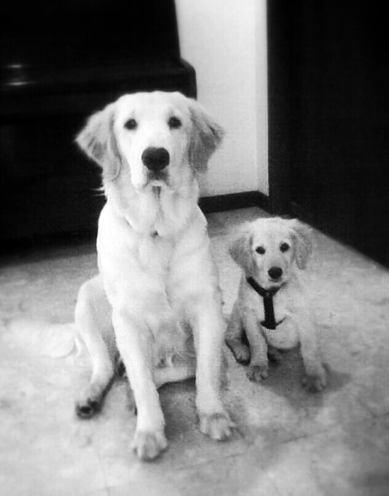 My Babies ♥ Maggie & Tito ♥ Flashback MyLifeMyWorldMyEverything Mydogsarecoolerthanyourkids Goldenretriever Love Popular Photos Dog Dog Love Doggy Love Taking Photos