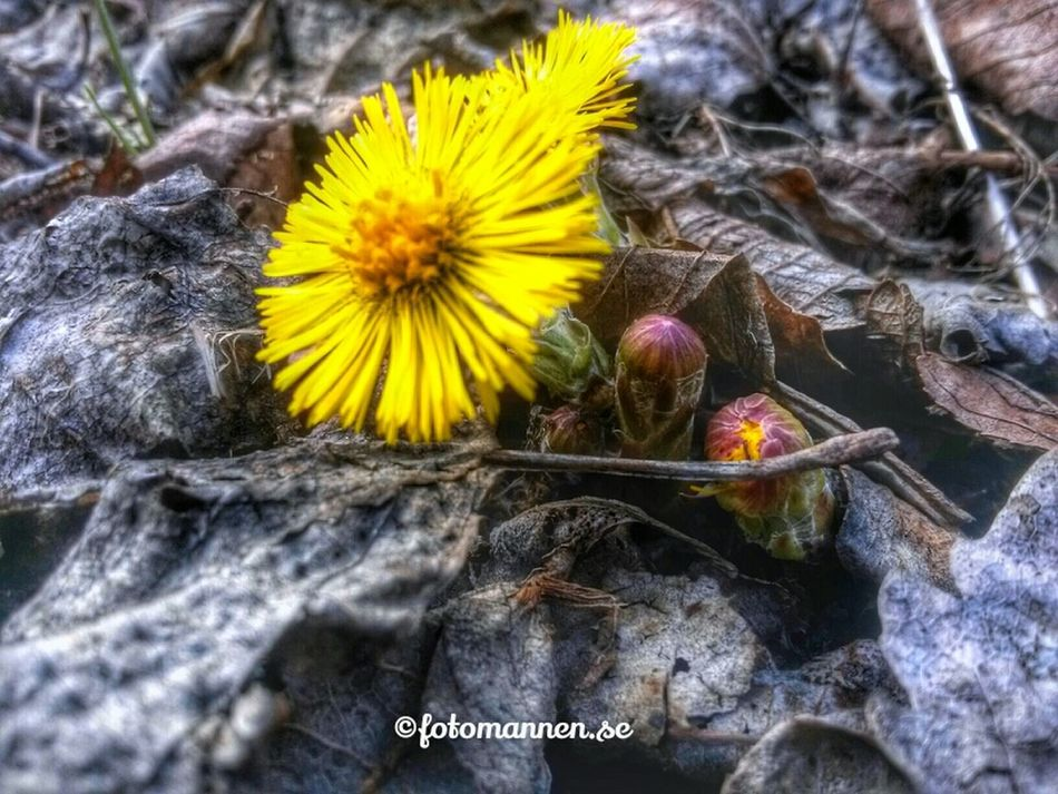 Springtime Eye Em Nature Lover Nature Collection Streamzoofamily AndroidHDR