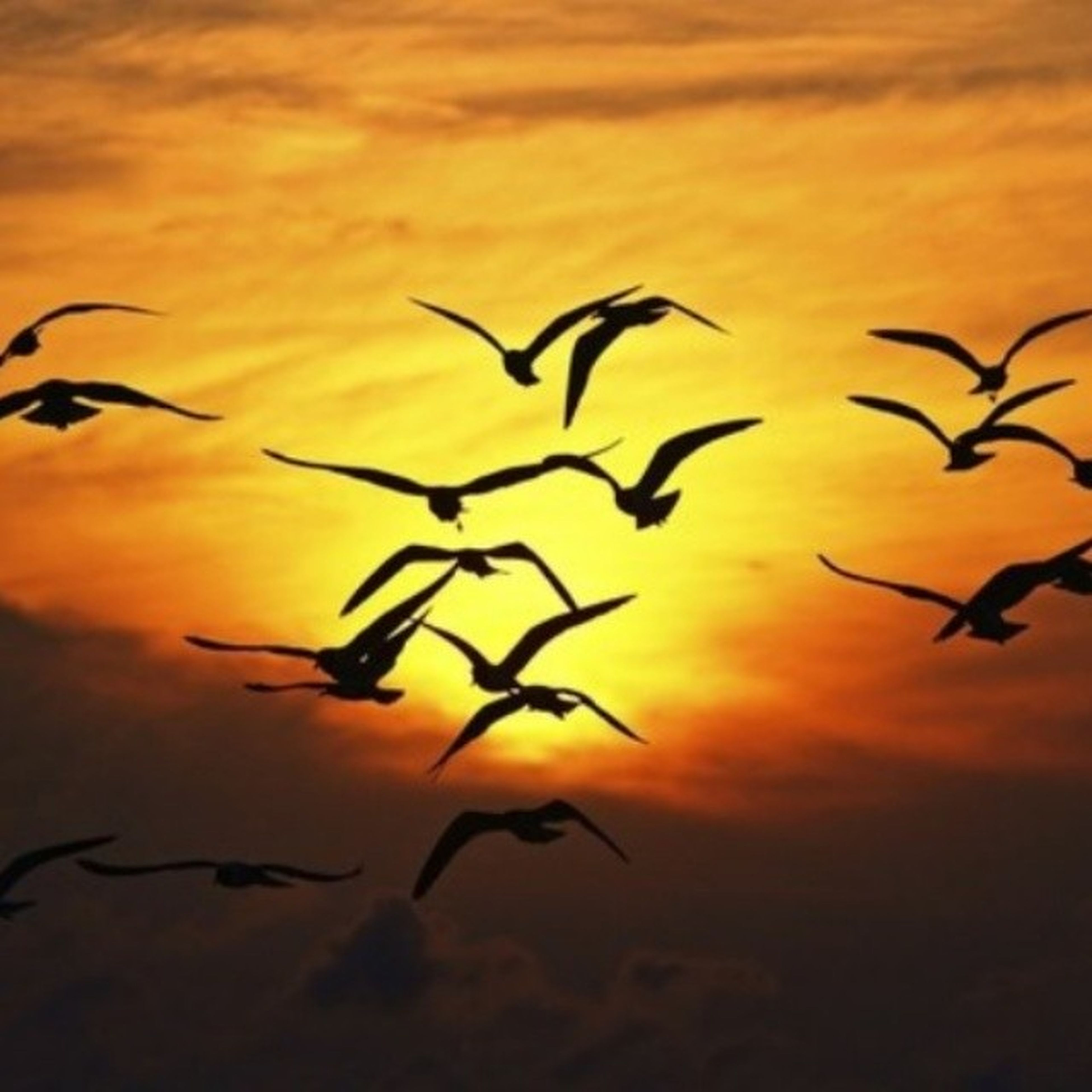bird, sunset, animal themes, flying, orange color, sky, animals in the wild, silhouette, wildlife, flock of birds, cloud - sky, nature, low angle view, beauty in nature, mid-air, outdoors, no people, dusk, cloud