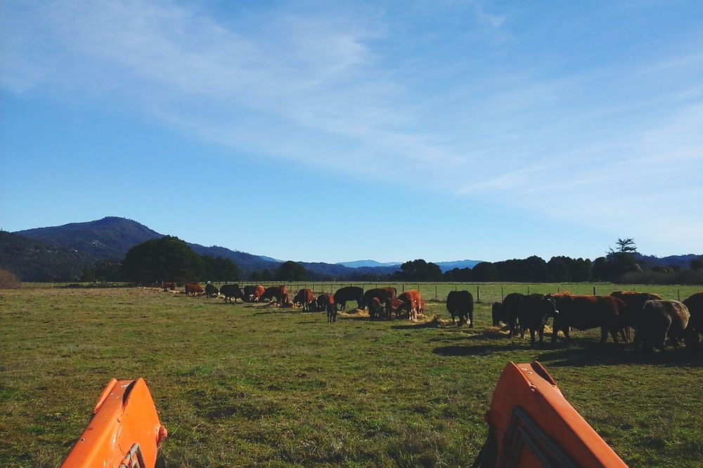 Ranch Life From My Point Of View Farm Animals Cows The Great Outdoors Beautiful Nature My Happy Place  Home Sweet Home Life In Colors Country Life Green Pastures Beautiful Day Farmland Pacific Northwest  Enjoying Life