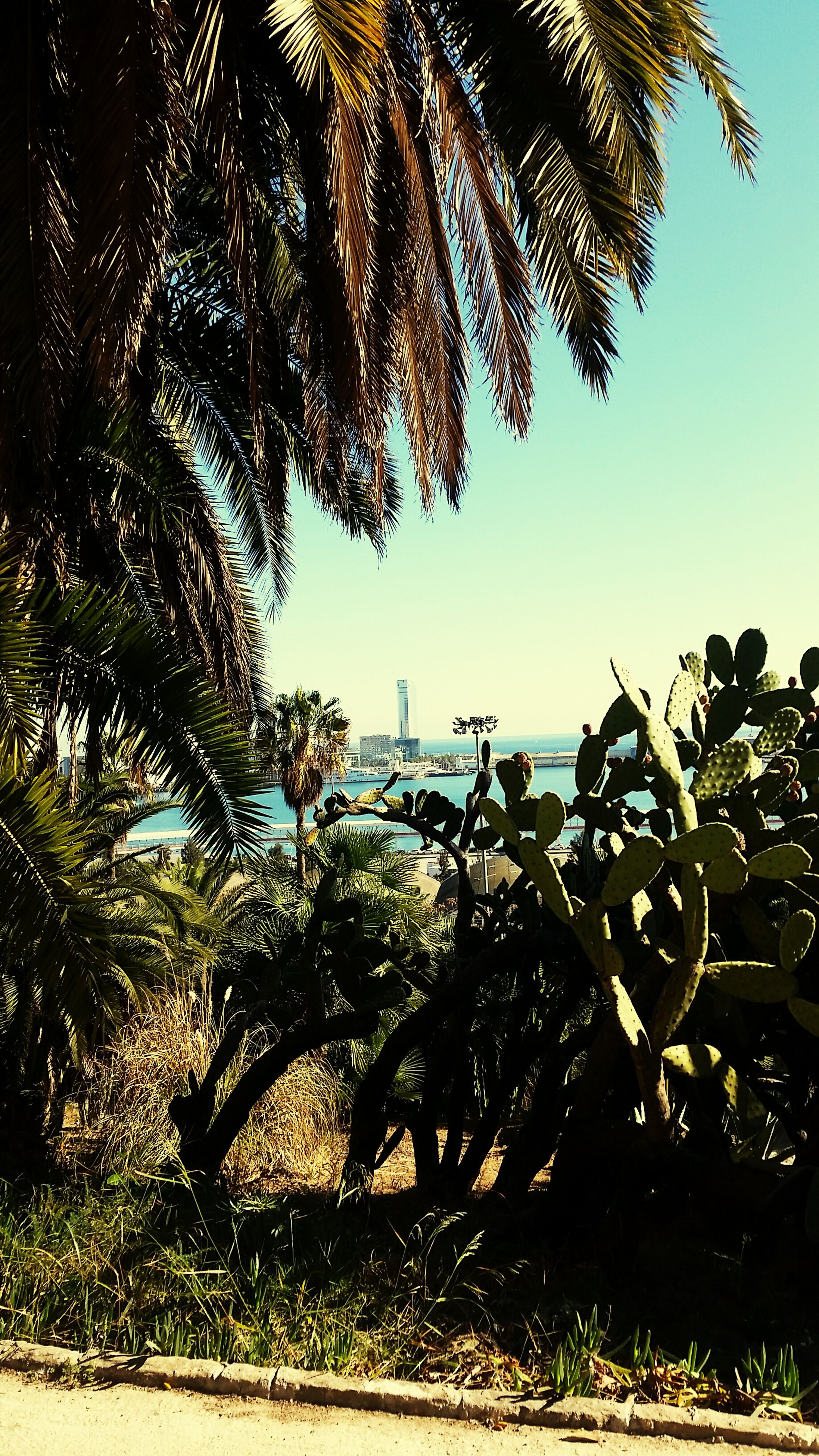 tree, palm tree, sea, horizon over water, beach, growth, clear sky, tranquility, nature, sky, water, branch, tranquil scene, scenics, beauty in nature, shore, sand, plant, sunlight, day