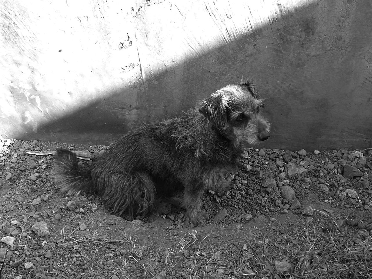 domestic animals, animal themes, pets, dog, one animal, mammal, day, no people, outdoors, sitting, nature, close-up