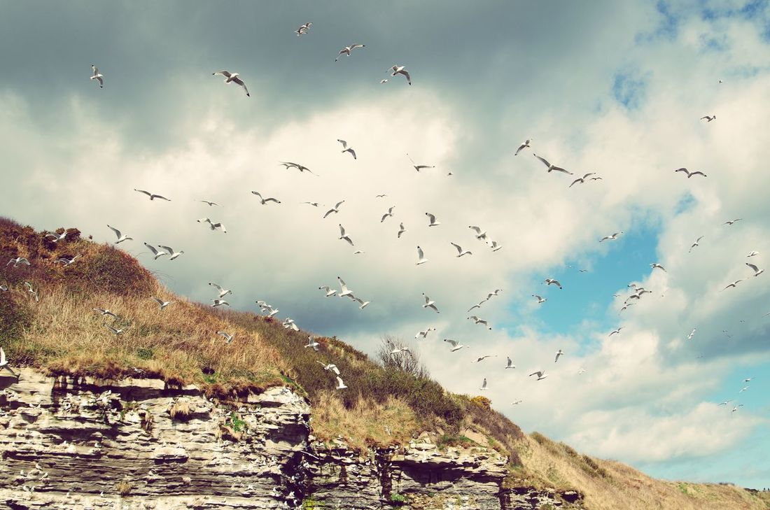 Flock Of Birds Large Group Of Animals Nature Outdoors Freedom Beauty In Nature