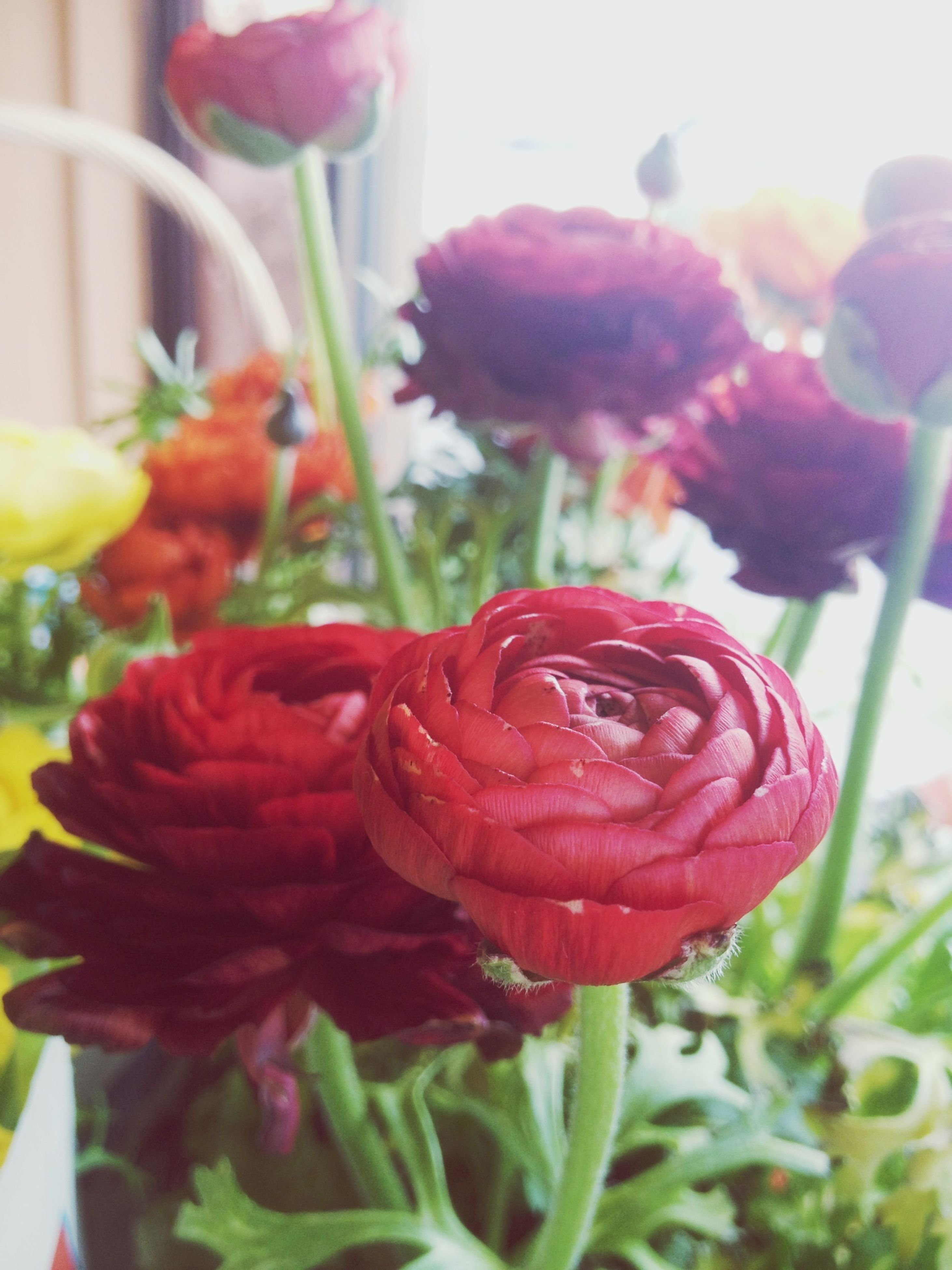 flower, petal, freshness, fragility, flower head, growth, focus on foreground, close-up, plant, beauty in nature, blooming, nature, red, rose - flower, stem, pink color, bud, in bloom, park - man made space, day