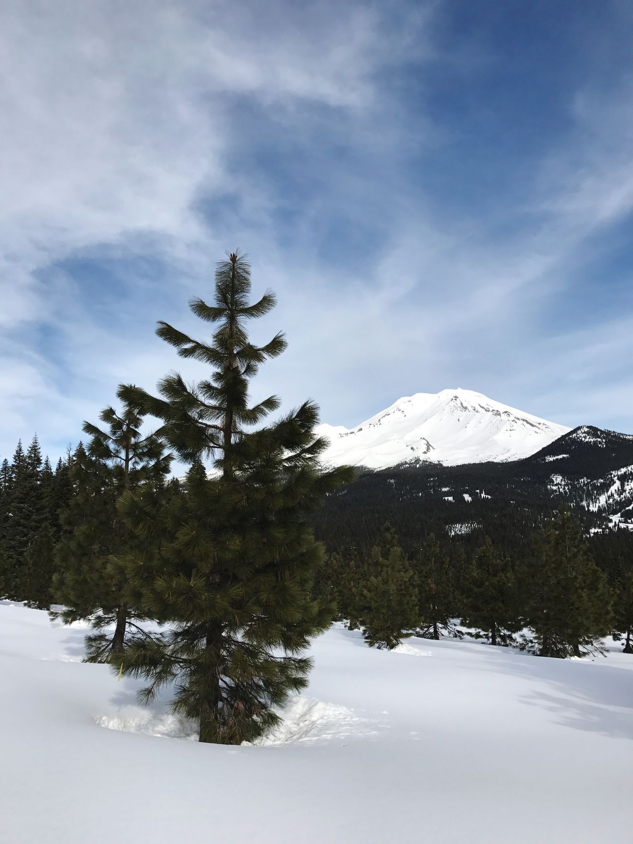 Snow Winter Mountain Nature Cold Temperature Beauty In Nature Sky Tree Scenics Tranquility Weather Landscape Tranquil Scene Outdoors No People Mountain Range Day Coniferous Tree Mt. Shasta Siskiyou County Nordic Afternoon Light Get Outside