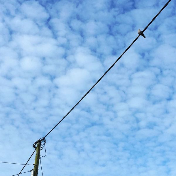 Bird on a wire Perching Bird Highup Good Morning Clouds And Sky Telegraph Wire Iphone6+ Just Looking Up...