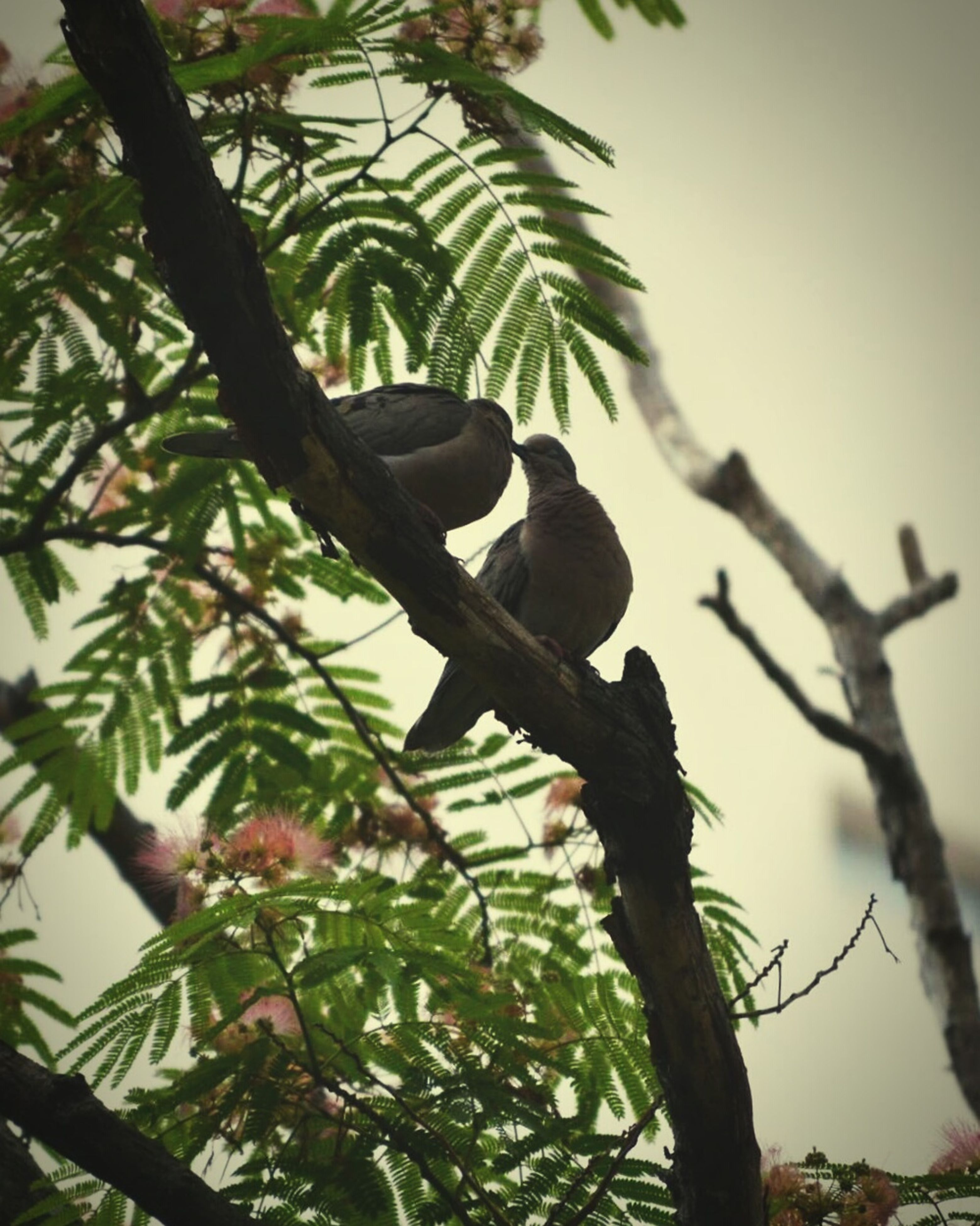tree, branch, low angle view, bird, growth, clear sky, leaf, nature, animals in the wild, animal themes, focus on foreground, wildlife, sky, perching, beauty in nature, day, close-up, outdoors, no people, one animal