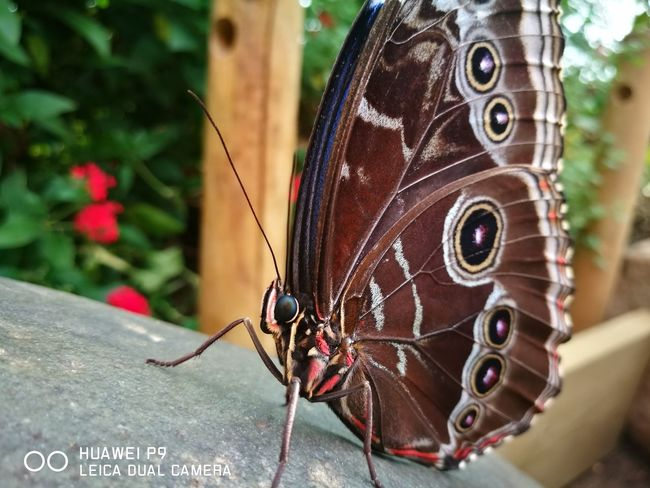 Butterfly Whipsnade Zoo Butterfly - Insect Insect Animal Themes